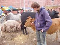 Lennart and his cow friends